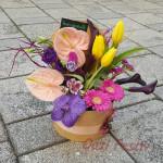Kompozim lulesh mix ne kuti